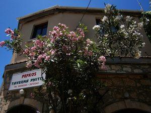 Fyti - Cipru: Taverna Phytis