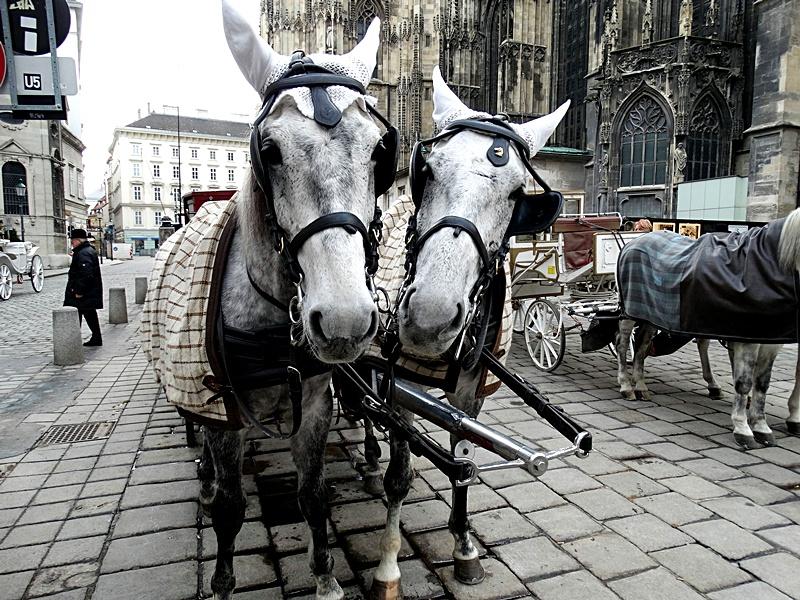 Imagini Viena